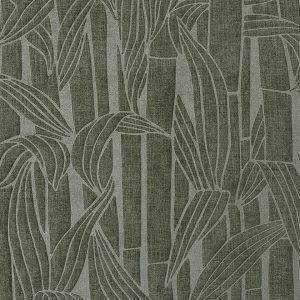 Bambusa 43010