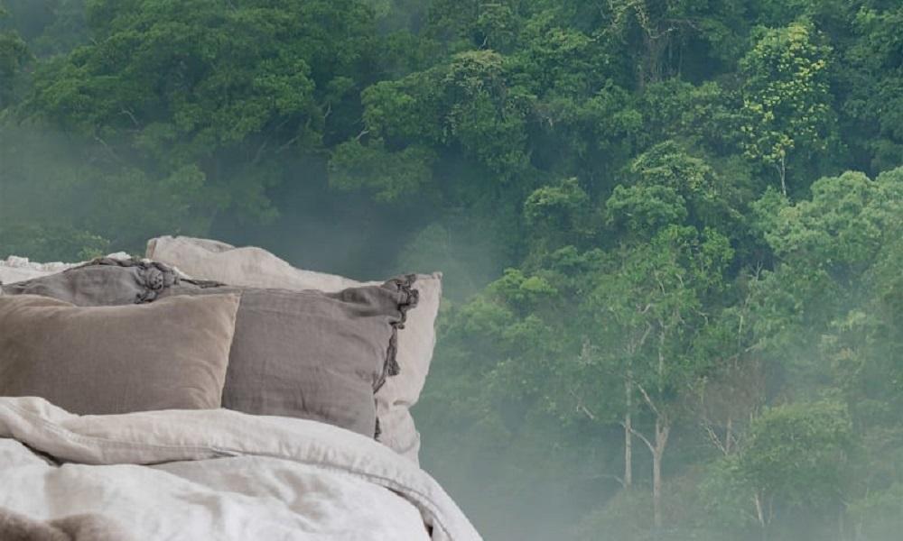 Misty Forest Interior Shot (2)